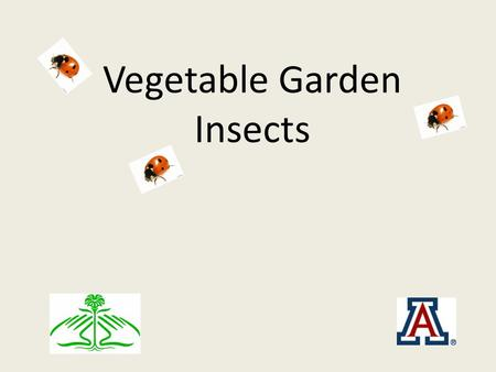 Vegetable Garden Insects. Getting Started on Managing Pests Identify the pest Can the pest be manually controlled (trapping, handpicking, squashing, shop.