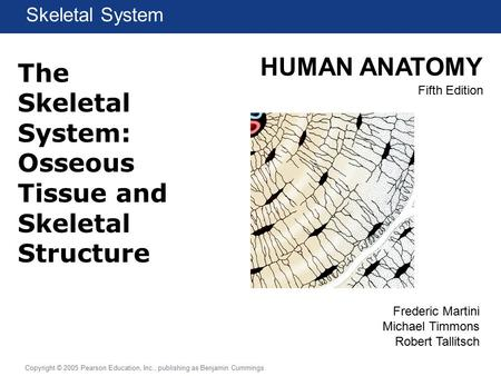 HUMAN ANATOMY Fifth Edition Chapter 1 Lecture Copyright © 2005 Pearson Education, Inc., publishing as Benjamin Cummings Skeletal System Frederic Martini.