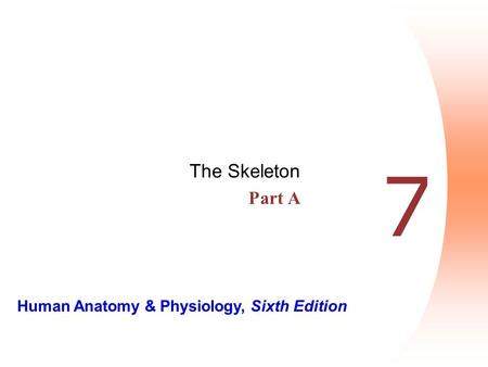 The Skeleton Part A 7.