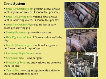 1 Crate System Space Per Gestating Sow: gestating sows always kept in gestation crates (14 square feet per sow). Space Per Nursing Sow: nursing sows always.