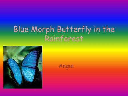 Blue Morph Butterfly in the Rainforest Angie. Introduction Tropical rainforest are really important. Tropical rainforest are located near the equator.
