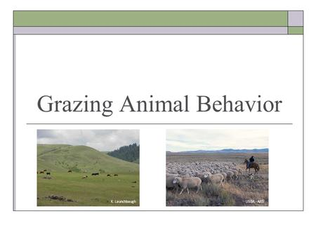 Grazing Animal Behavior K. Launchbaugh USDA - ARS.