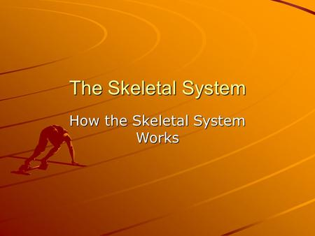 The Skeletal System How the Skeletal System Works.