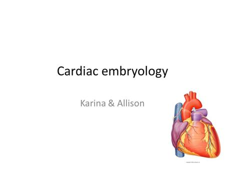 Cardiac embryology Karina & Allison.