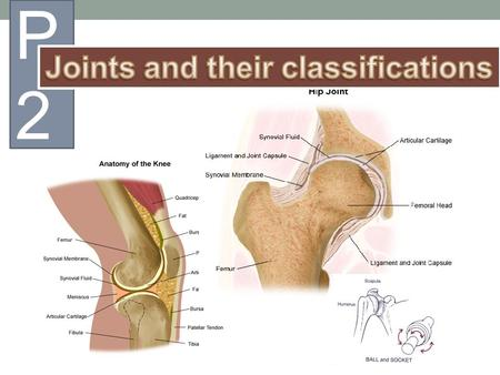 Joints and their classifications