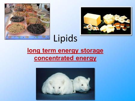 Lipids long term energy storage concentrated energy.