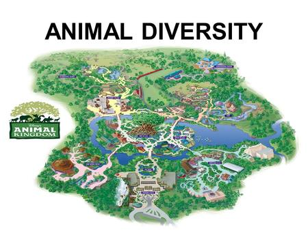 ANIMAL DIVERSITY. YOU MUST KNOW… THE CHARACTERISTICS OF ANIMALS THE STAGES OF ANIMAL DEVELOPMENT HOW TO SORT THE ANIMAL PHYLA BASED ON SYMMETRY, DEVLOPMENT.