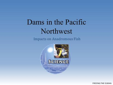 Dams in the Pacific Northwest Impacts on Anadromous Fish.