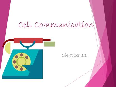 Cell Communication Chapter 11. Cell communication.