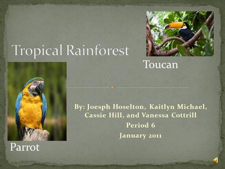 By: Joesph Hoselton, Kaitlyn Michael, Cassie Hill, and Vanessa Cottrill Period 6 January 2011 Toucan Parrot.