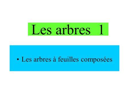 Les Arbres 1 A Feuilles Composees Aesculus Hyppocastaneum Le Marronnier
