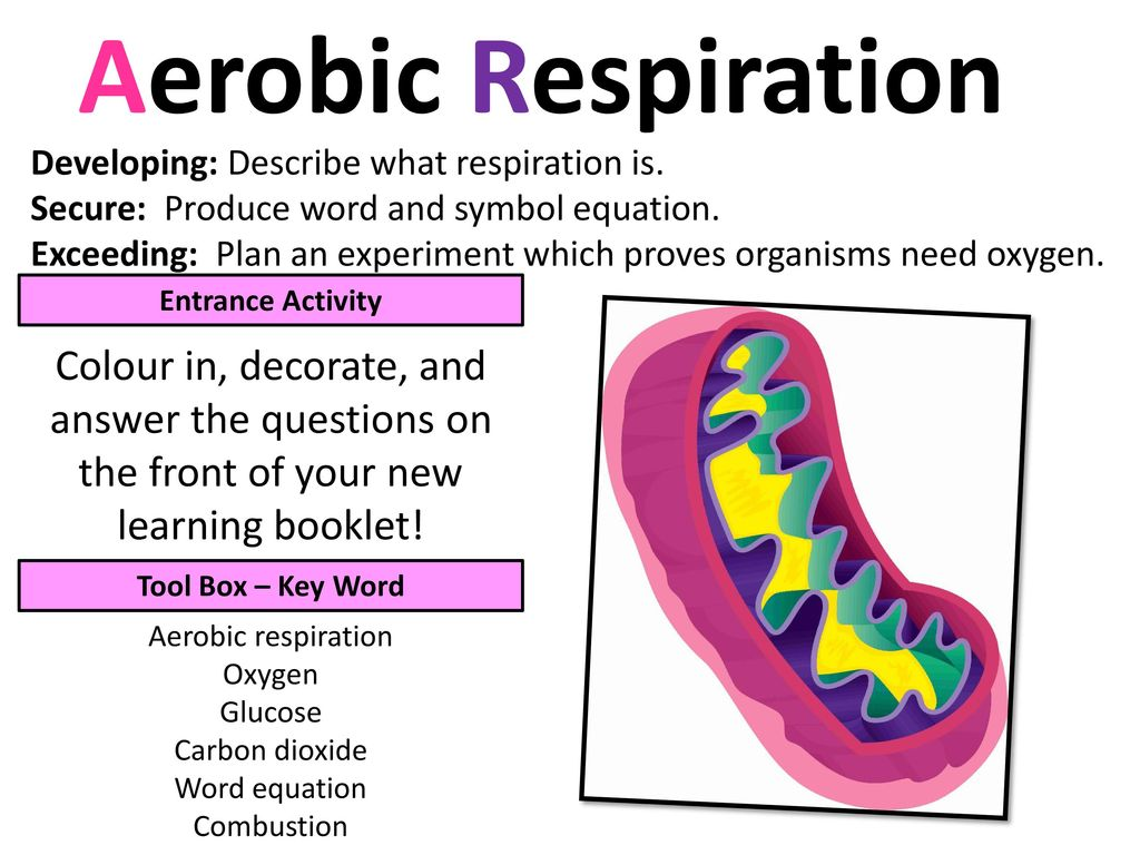 Aerobic Respiration Developing Describe What Respiration Is Ppt Download
