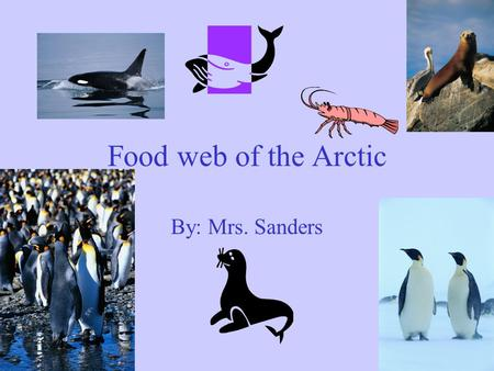 Food web of the Arctic By: Mrs. Sanders Plankton Plankton are microscopic organisms that float freely with oceanic currents and in other bodies of water.
