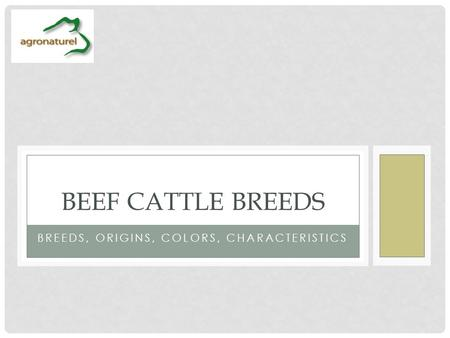 BREEDS, ORIGINS, COLORS, CHARACTERISTICS BEEF CATTLE BREEDS.