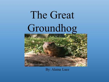 The Great Groundhog By: Alaina Luce.