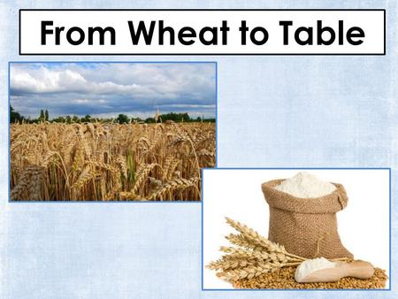 From Wheat to Table. Table of Contents A farmer plants the wheat page 3 A harvester cuts the wheat page 4 A truck driver takes the seeds to the mill page.