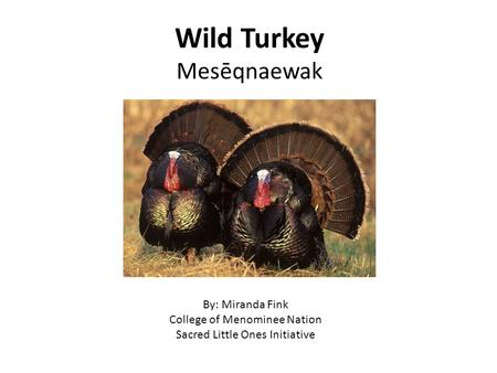 Wild Turkey Mesēqnaewak By: Miranda Fink College of Menominee Nation Sacred Little Ones Initiative.