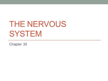 THE NERVOUS SYSTEM Chapter 35. Body Organization Cell- basic unit of structure and function Specialized- made for a particular function Tissues Epithelial-