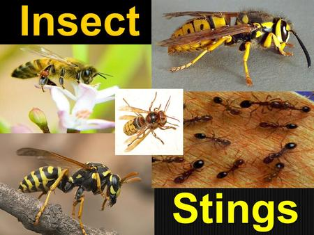 Stings.  Although many different types of insects in the United States are able to inflict a poisonous bite or sting, the insects most likely to cause.