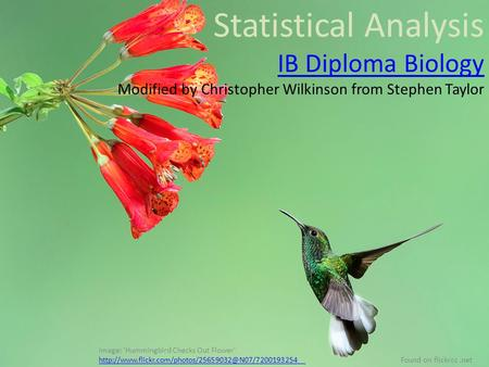 Statistical Analysis IB Diploma Biology Modified by Christopher Wilkinson from Stephen Taylor Image: 'Hummingbird Checks Out Flower'