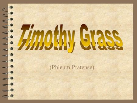(Phleum Pratense) Timothy Grass  Scientific name: Phleum pratense  Family: Gramineae(grass family)  Nickname: Herd grass  Originated in: New England.