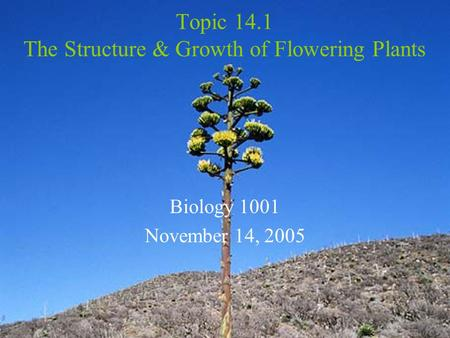Topic 14.1 The Structure & Growth of Flowering Plants Biology 1001 November 14, 2005.