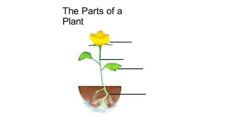 The Parts of a Plant. The flower is the part of the plant that attracts pollinators such as bees. The flower is the part of the plant that makes seeds.