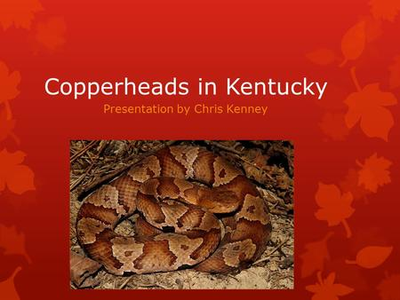 Copperheads in Kentucky Presentation by Chris Kenney.