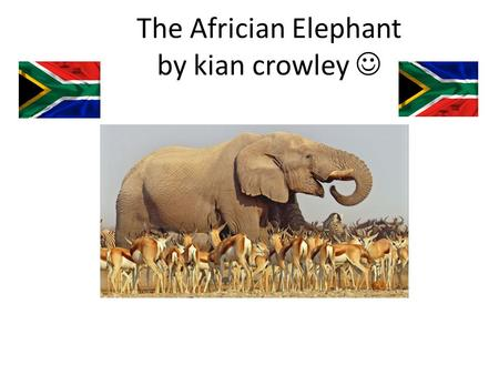 The Africian Elephant by kian crowley.  Facts The africian elephants are the largest land animal in the world The elephants weigh (on average) 6000kg.