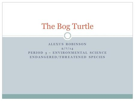 ALEXUS ROBINSON 2/7/14 PERIOD 3 – ENVIRONMENTAL SCIENCE ENDANGERED/THREATENED SPECIES The Bog Turtle.