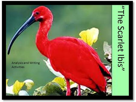 """The Scarlet Ibis"" Analysis and Writing Activities."