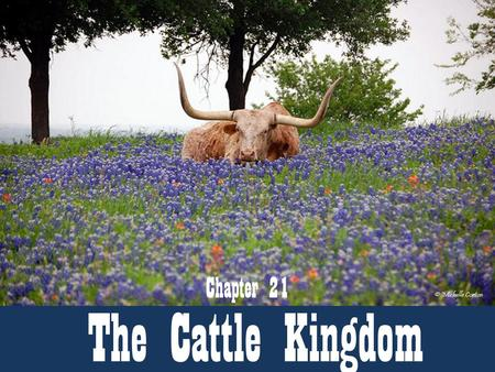 Chapter 21 The Cattle Kingdom.