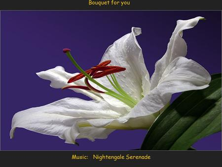 Music: Nightengale Serenade Bouquet for you You may not realize this but the following is 100% true. Think about some part of it daily.