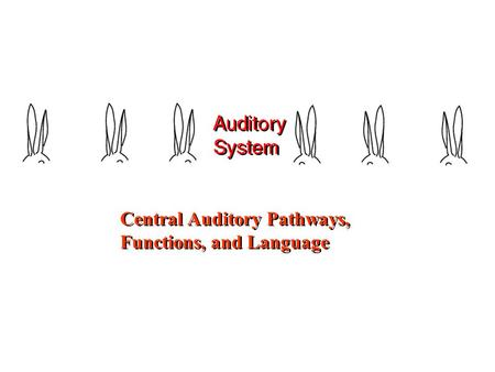 Central Auditory Pathways, Functions, and Language Central Auditory Pathways, Functions, and Language.