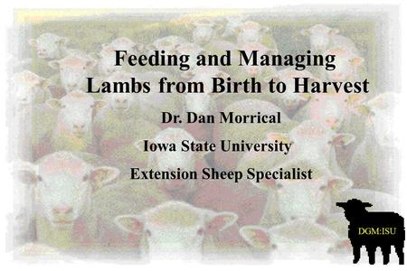 Lambs from Birth to Harvest Feeding and Managing