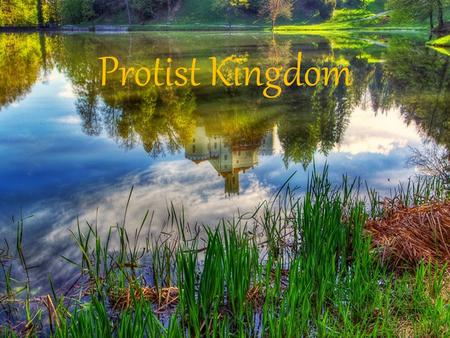 Protist Kingdom. What is a Protist? ~ Diverse group of Eukaryotic organisms that exist as independent cells or as a colony of cells. ~ Do not fall into.