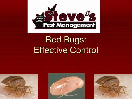 Bed Bugs: Effective Control. Introduction  Steve Peltier has over 35 years experience in Pest Management  Steve's Pest Management has completed over.