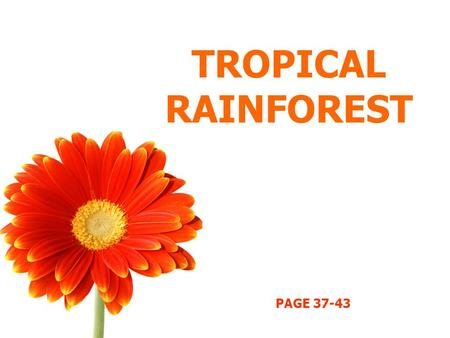 TROPICAL RAINFOREST PAGE 37-43. OBJECTIVES Describe and explain distribution of tropical rainforest. Describe the features of tropical rainforests. Describe.