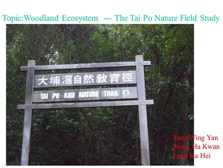 Topic:Woodland Ecosystem --- The Tai Po Nature Field Study Tang Wing Yan Wong Ha Kwan Fung Ka Hei.