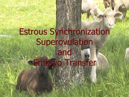 Estrous Synchronization A management technique that makes use of hormones to control or reschedule the estrous cycle A management technique that makes.