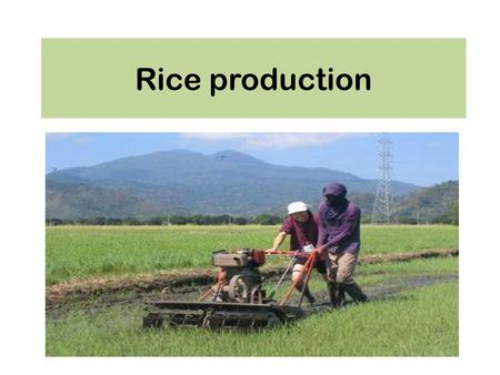 Rice production.