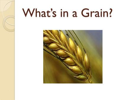 What's in a Grain?.
