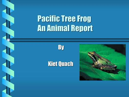 Pacific Tree Frog An Animal Report By Kiet Quach.