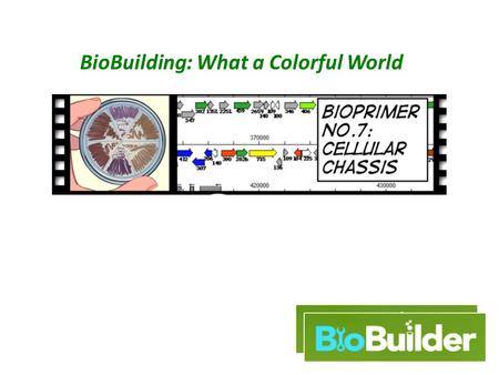 BioBuilding: What a Colorful World. An engineering paradigm Design Build Test The focus of this lab.