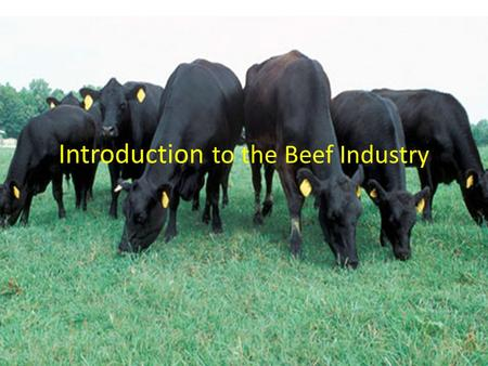 Introduction to the Beef Industry. What is the importance of the beef industry? Missouri ranks 2 nd nationally in number of beef cattle – Texas 1 st (larger.