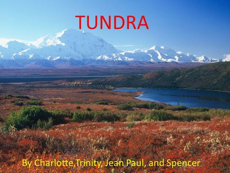 TUNDRA By Charlotte,Trinity, Jean Paul, and Spencer.