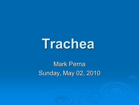 Trachea Mark Perna Sunday, May 02, 2010.