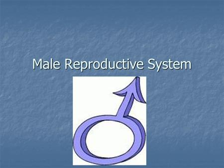 Male Reproductive System. Before we begin… We need to be mature and respectful during this unit… We need to be mature and respectful during this unit…