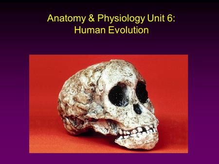 Anatomy & Physiology Unit 6: Human Evolution. Classification Hierarchy Kingdom Animal Phylum Chordate Class Mammal Order Primates Family Hominids Genus.