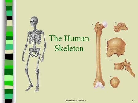 The Human Skeleton Sport Books Publisher.